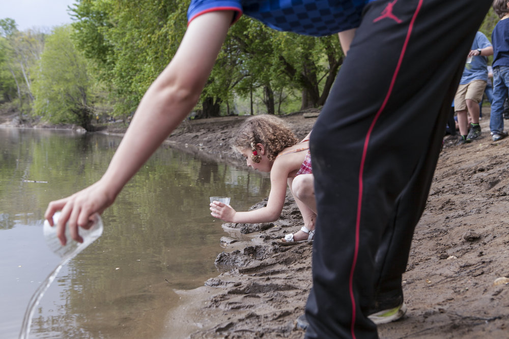 Students at Westbrook Elementary release American shad fry into the Potomac near Great Falls in 2015. This was the school's 20th anniversary of participating in the shad program.