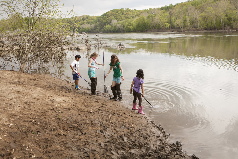 Students take part in Westbrook Elementary School's 20th annual American shad release day.