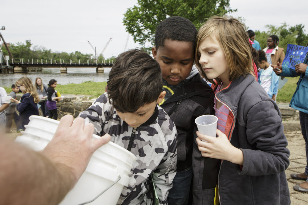 "Students from Capitol City Public Charter school peer into a bucket containing American shad fry, which are clear, very small, and have been described as ""two eyes and a wiggle."""