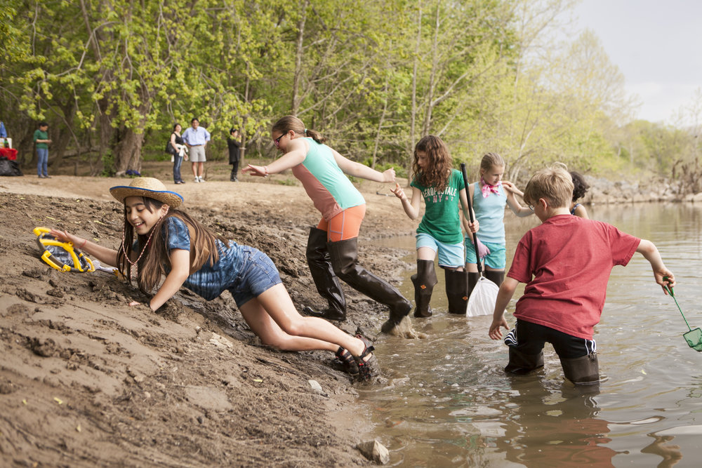 Students from Westbrook Elementary release American shad fry into the Potomac and then return up the muddy bank to re-fill their cups.