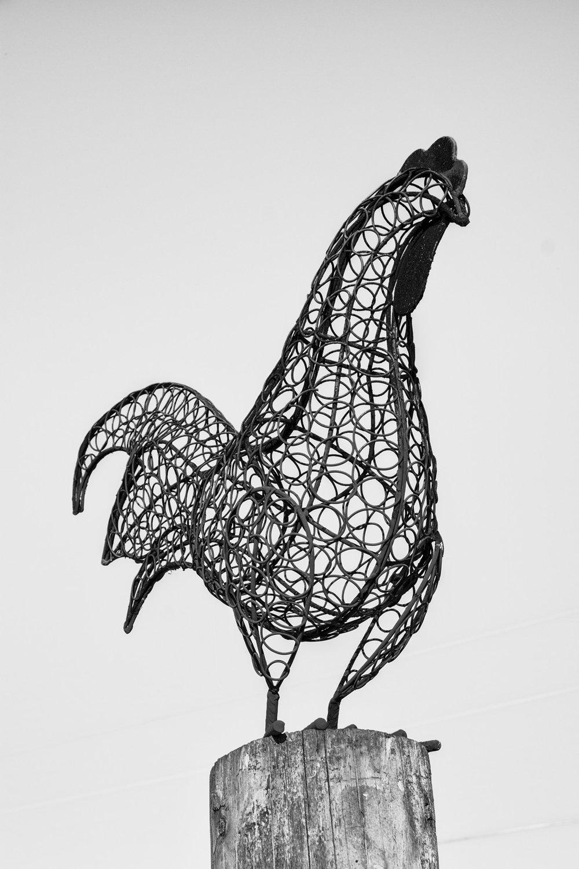 Birds & Bugs — David Foster Photography
