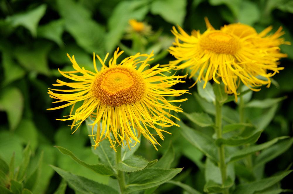 Yellow flowers david foster photography yellow flowers mightylinksfo