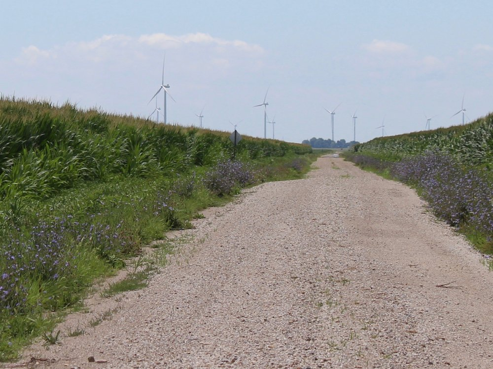 Wind turbines rise in the distance between central Illinois cornfields. (One Illinois/Ted Cox)