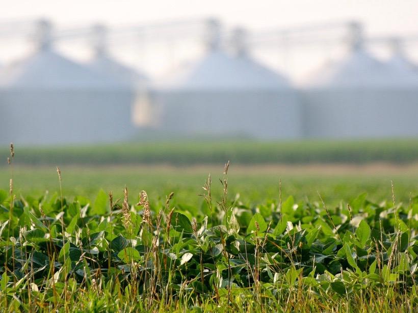 A soybean farm near Seymour outside Champaign. (Flickr/Kevin Dooley)