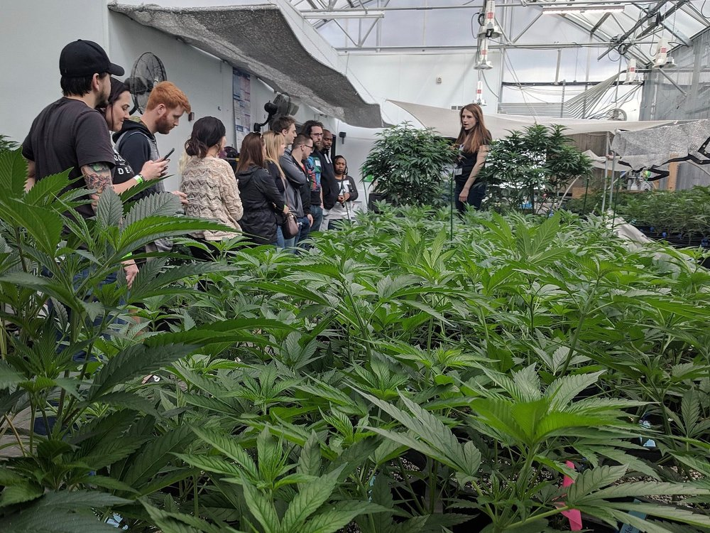 Colorado tourists visit a marijuana greenhouse. A new study finds legalized pot could increase Illinois tourism. (Wikimedia Commons/My 420 Tour)
