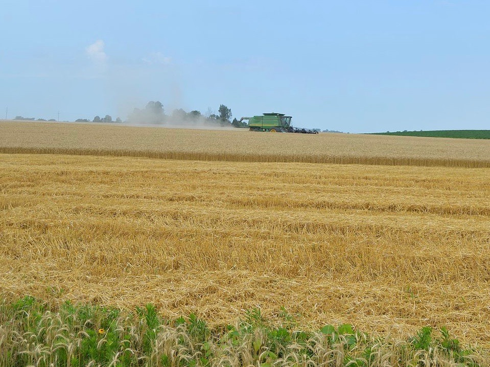An Illinois wheat farmer harvests the crop in Gallatin County. (Wikimedia Commons)