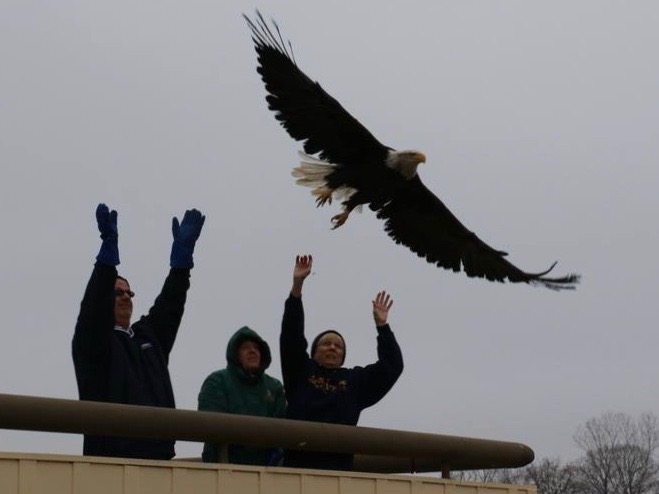 TreeHouse Wildlife Center staff free a bald eagle in an earlier release at Two Rivers. (Facebook/TreeHouse Wildlife Center)