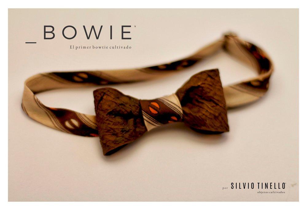_BOWIE El primer bowtie cultivado - Silvio Tinello.jpg