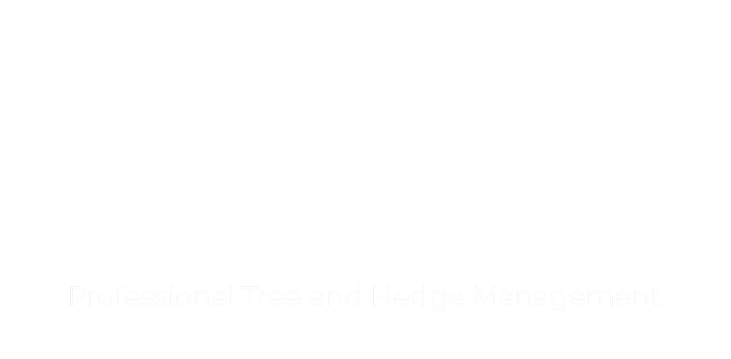 Tree Surgery West Sussex | Tree Surgery Surrey | Oldfield Tree Services