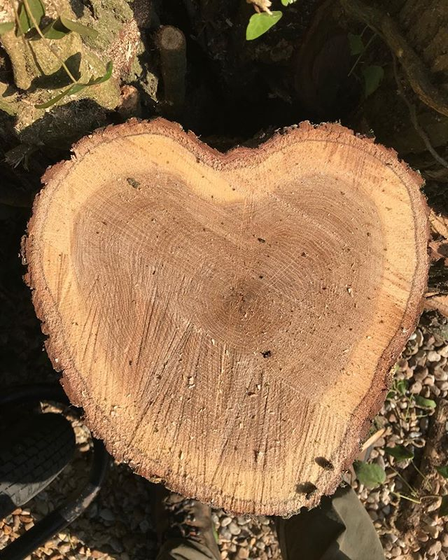#lovetrees
