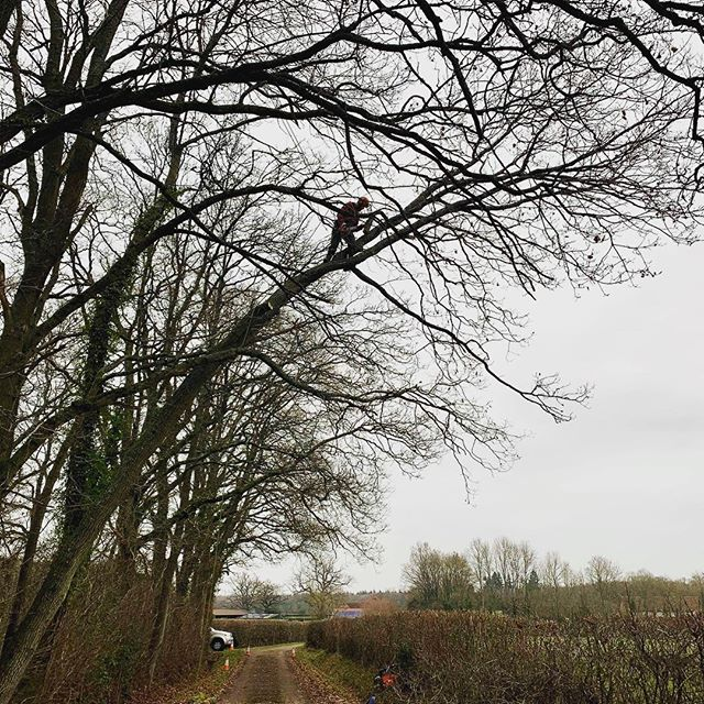 This Oak tree, which was once upright, had gradually started leaning further and further out over the lane from the edge of the woodland, so the decision was made to remove it before it became more of a hazard. I anchored my climbing line into another tree behind and safely dismantled it despite the freezing wind and sleet. I was glad for a cup of tea when I got down! #oldfieldtreeservices #treeremoval #arborist #treesurgeon #oak #quercusrobur #treeclimber #treesurgery