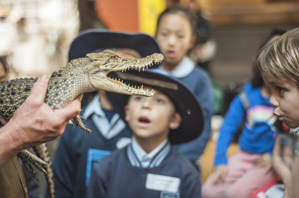 Australian Museum Science Festival