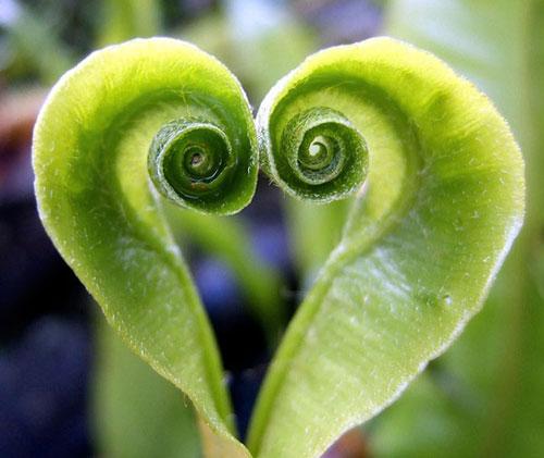 heart-curl.jpg