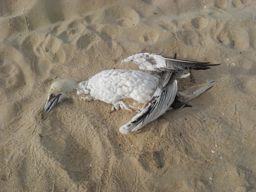 Slide 4 bird-1226969_1920.jpg