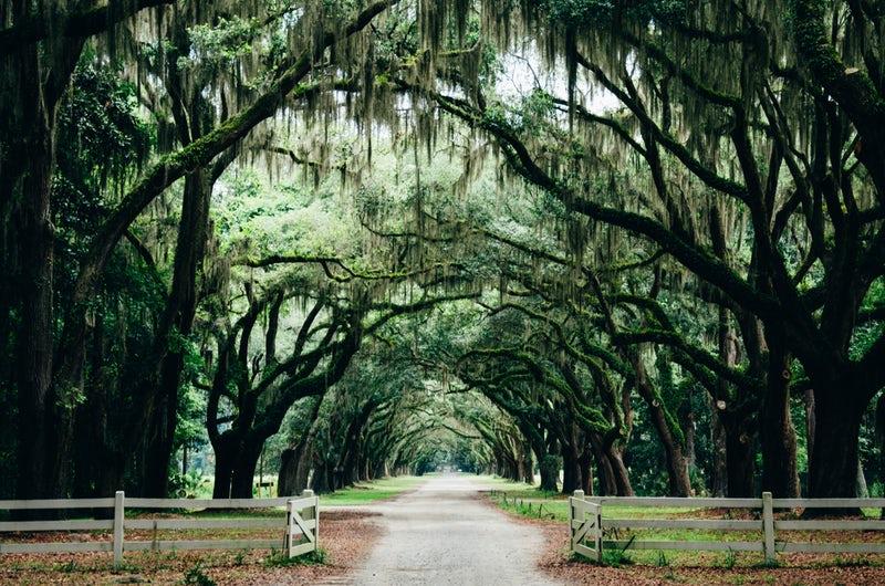 plantation.jpeg