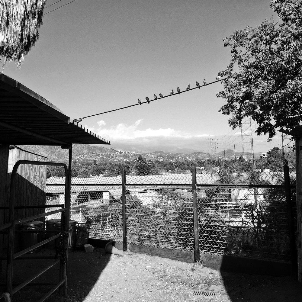 10_CR_iPhone_Rancho_0012.jpg