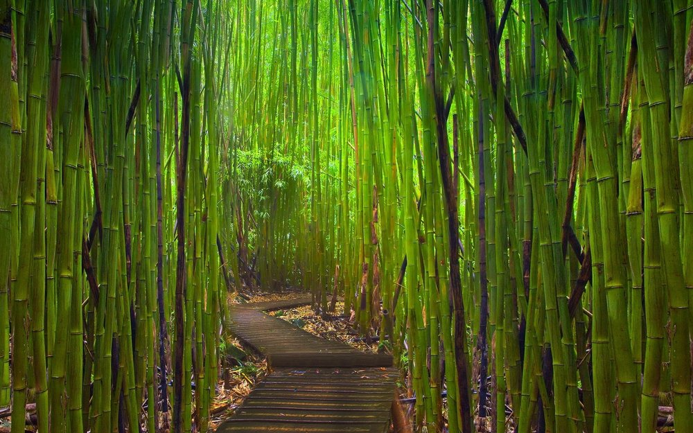 bamboo-forest-path-wallpaper-3.jpg