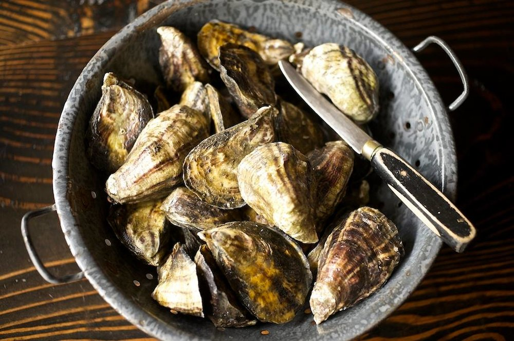 DLR oysters.jpg