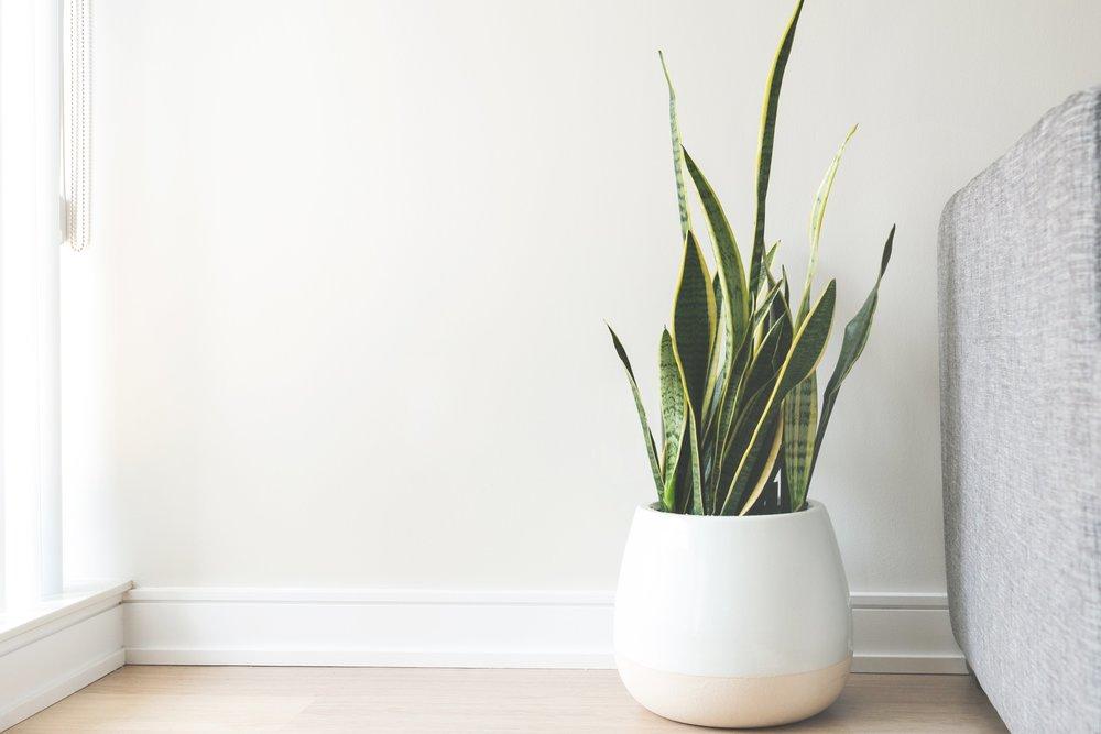 house-plant-in-white-pot_4460x4460.jpg