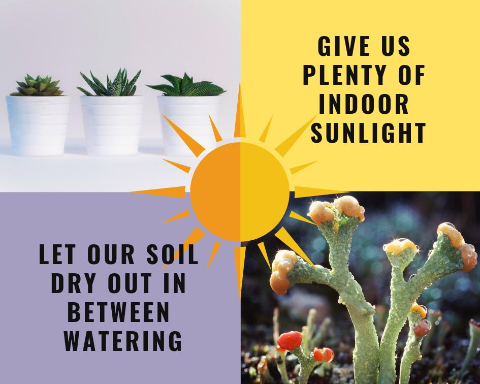 Let soil dry out in between watering (1).png