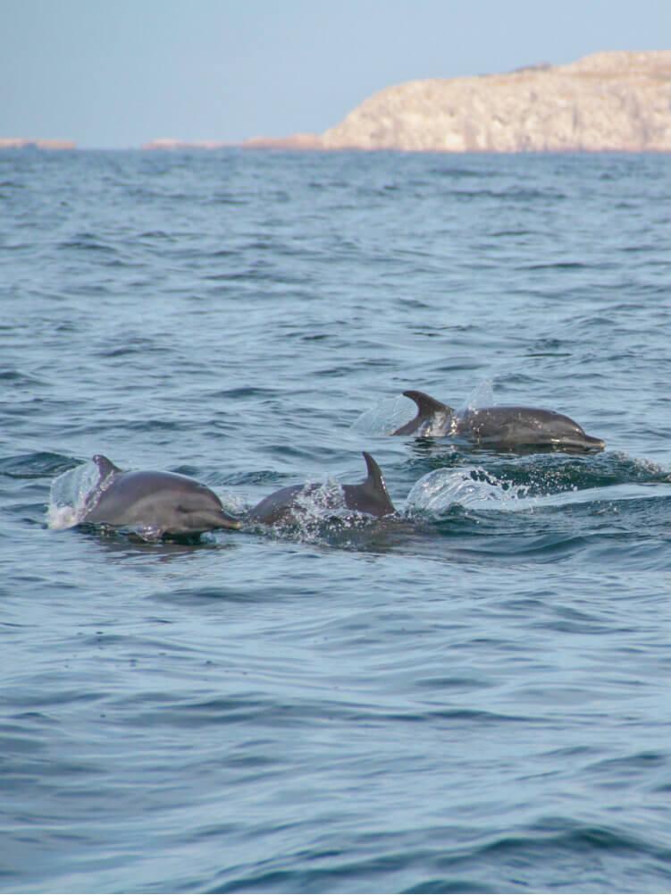 Marietas VA - dolphin.jpg