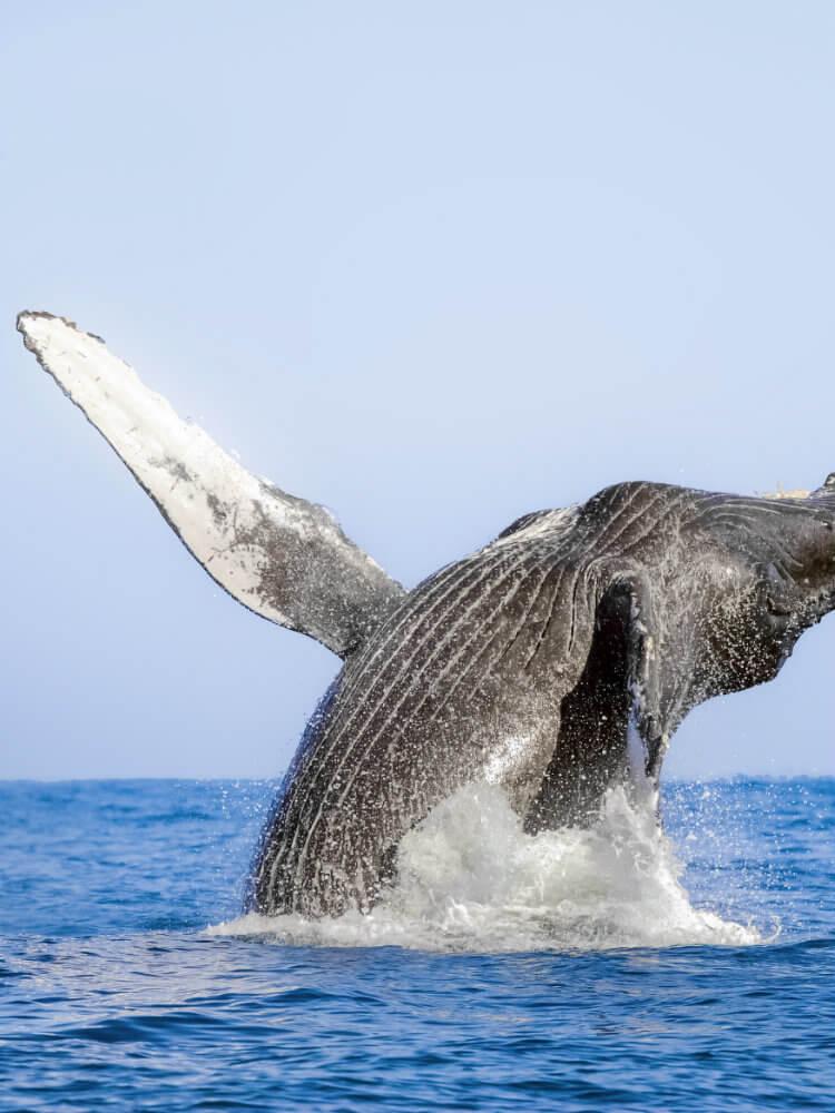 Marietas VA - whale.jpg