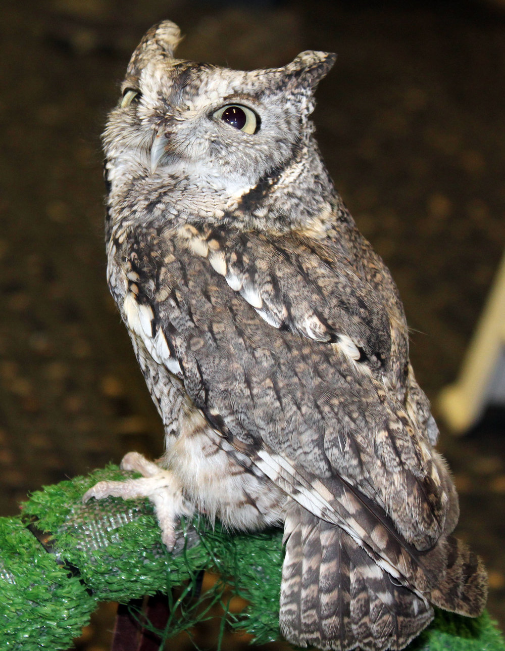 BPRC Donation owl.jpg