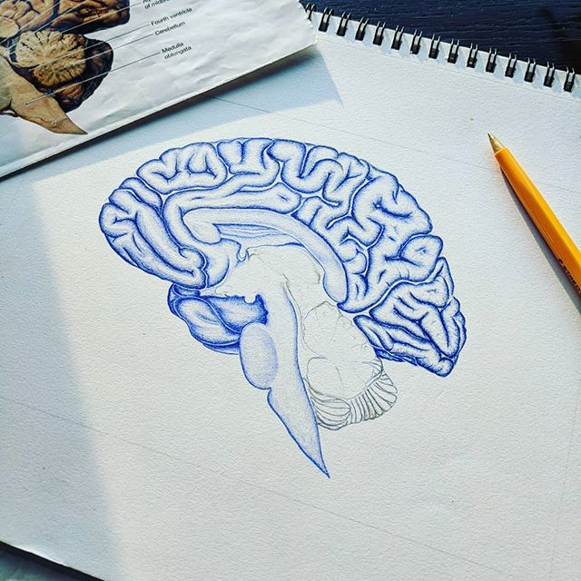 It's been a while since I've made a post, so let's do a progress piece. Slowly working away at this brain as I try to finish up my PhD, here's to a crazy next couple of months of working towards the finish line! . . . . . #neuroanatomy #neuroscience #waybackwednesday #anatomy #anatomydrawing #sciart #medart #hamont #illustration #surgery #science #biology #lab #lablife #gradstudent #research #beauty  #mystaedtler #staedtler #ink #art #artist #illustrator #bodyart #medicine #medical #medschool #ymanatomy