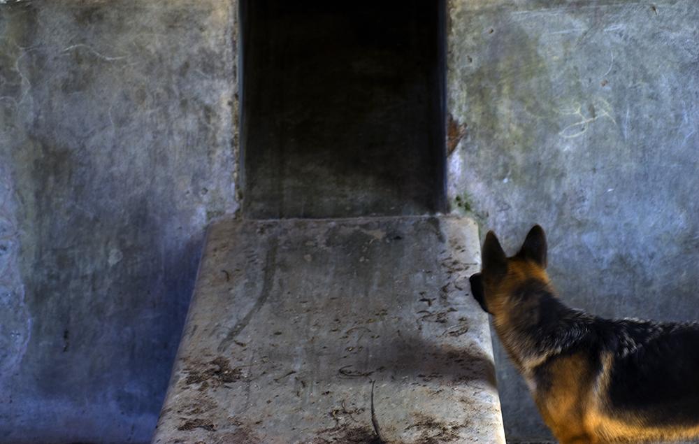 Cão Rothko  70x100cm  Coleção Claudio Antunes