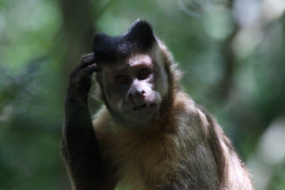 animal-ape-blur-767197.jpg