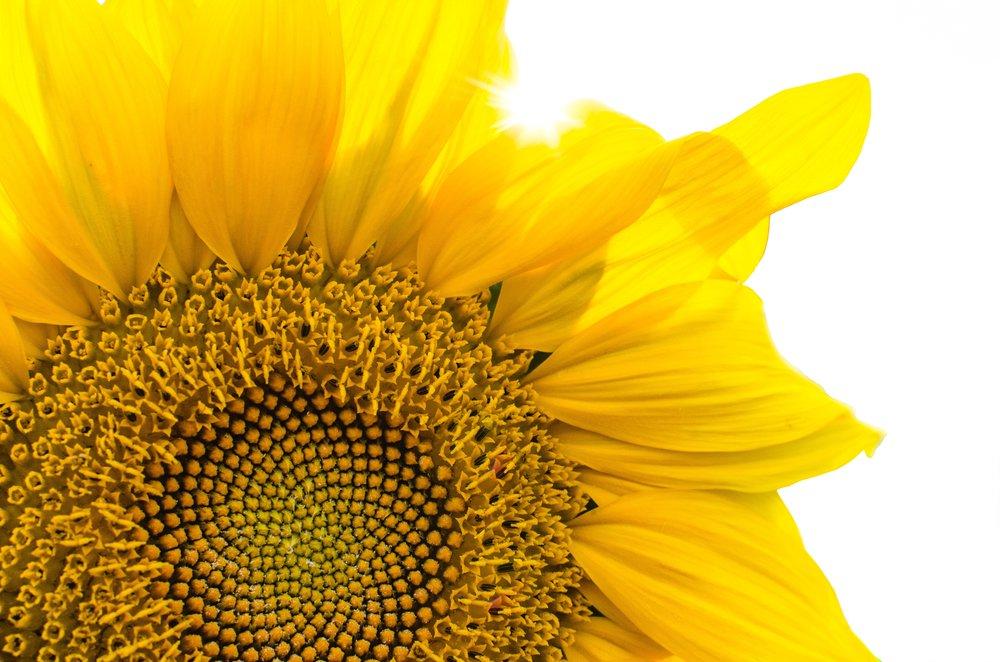 beautiful-blooming-blossom-293403.jpg