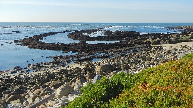 Exploring Tide Pools in San Mateo County ? Good2Know Network