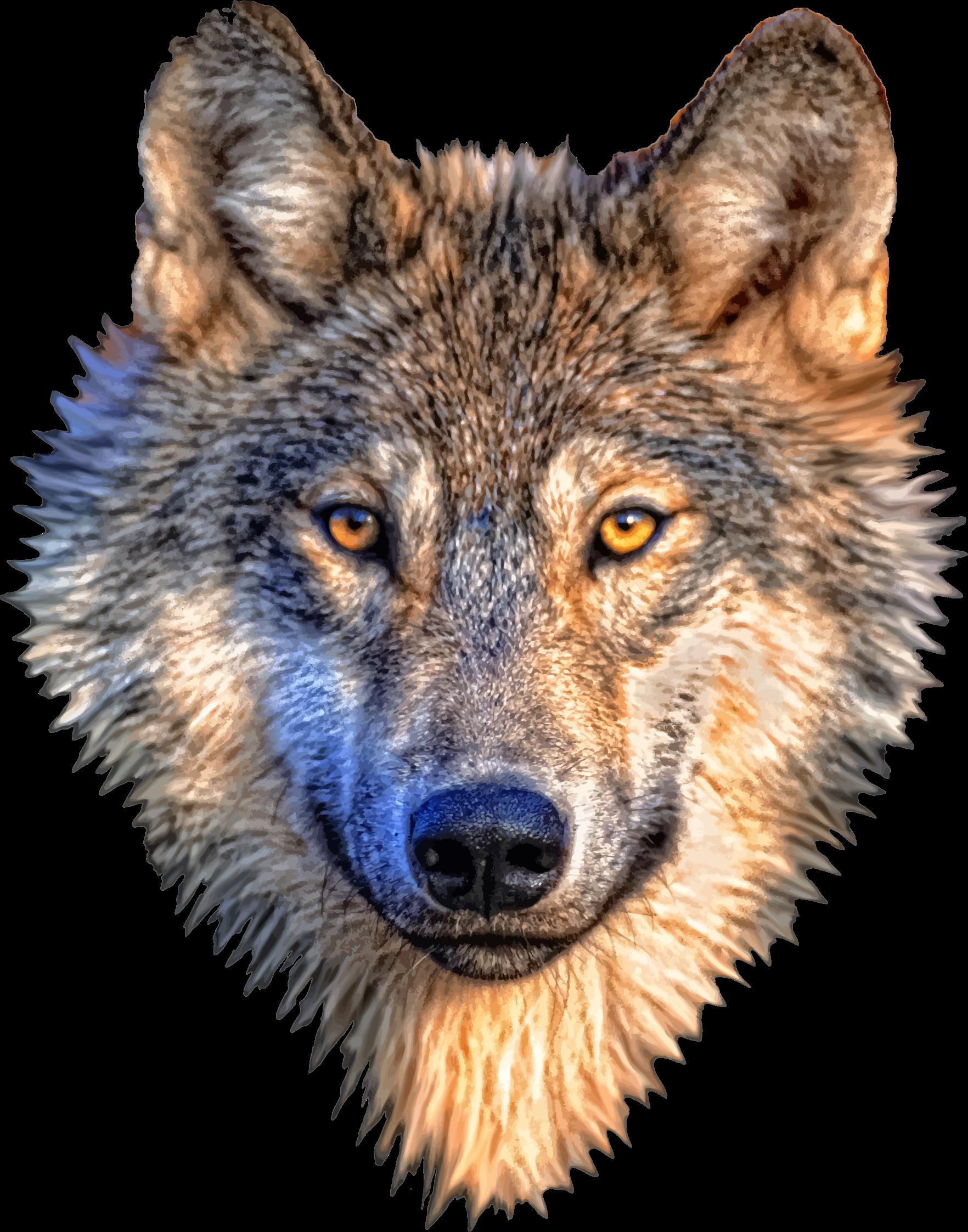 wild wolf fine arts studio