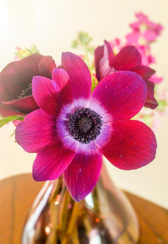 anemone 3.jpg