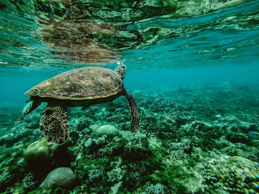 animal-aquatic-corals-847393.jpg