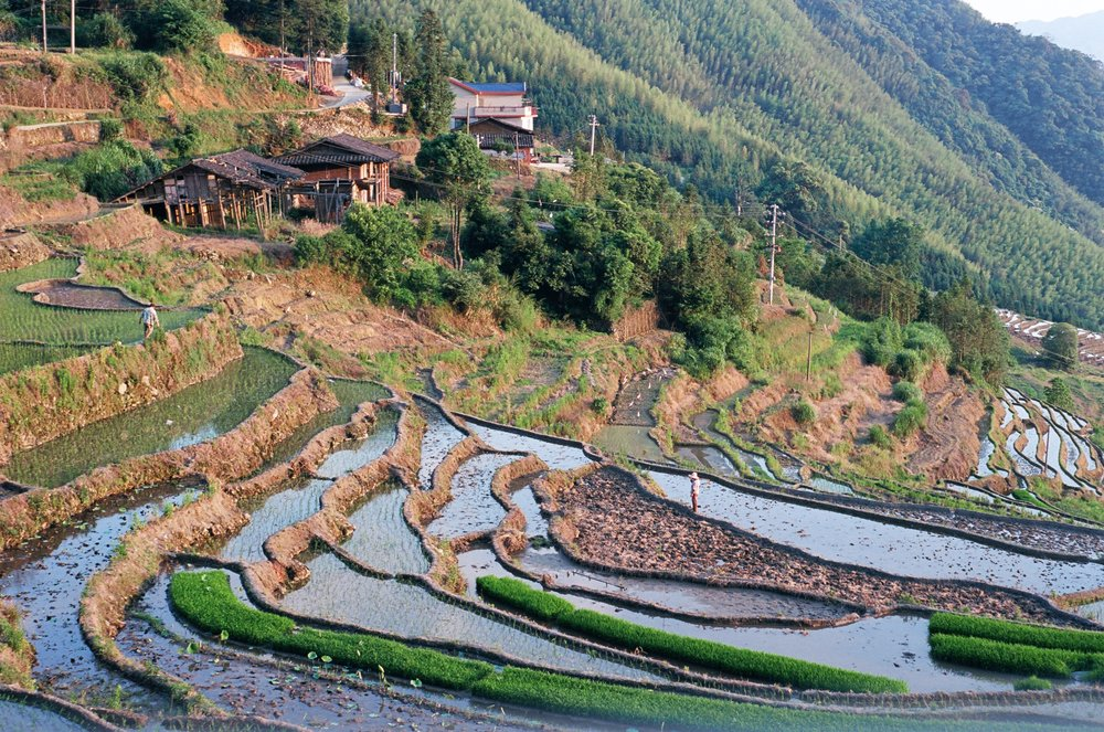 youxi county, fujian. farmers tend to their rice terraces—which were unfortunately drier than usual this year due to lack of rainfall—before the sun sets.