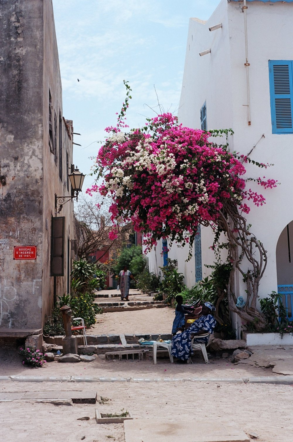 gorée island. locals find refuge from the sun under the shade of a crepe myrtle tree.