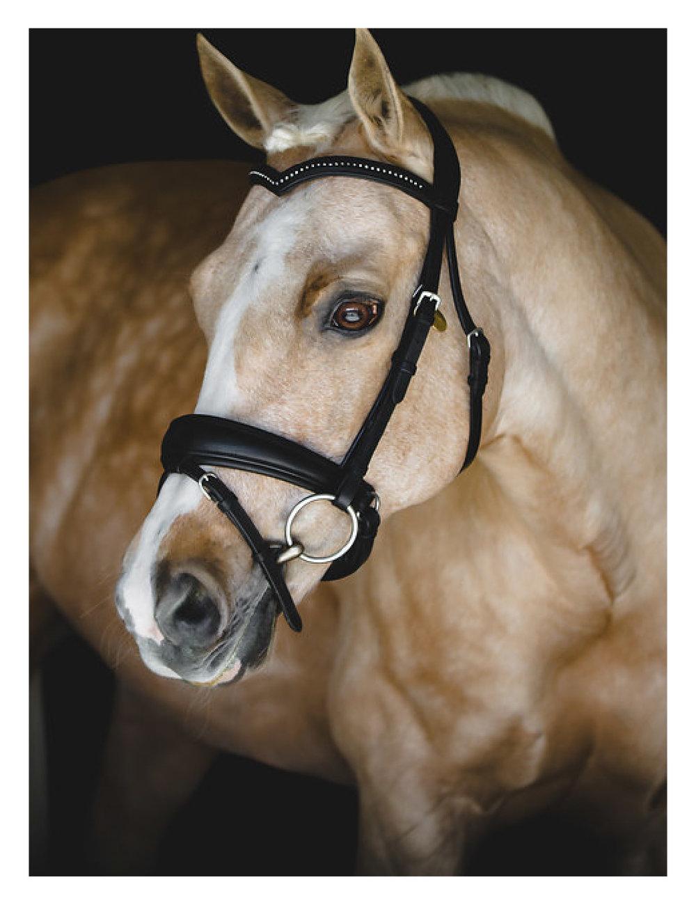 Equine Portraits - Subtitle font
