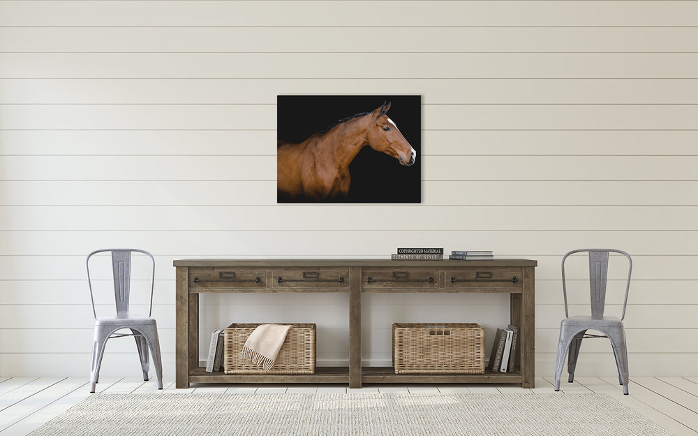 Equine White Background Horse Photography Sara Shier