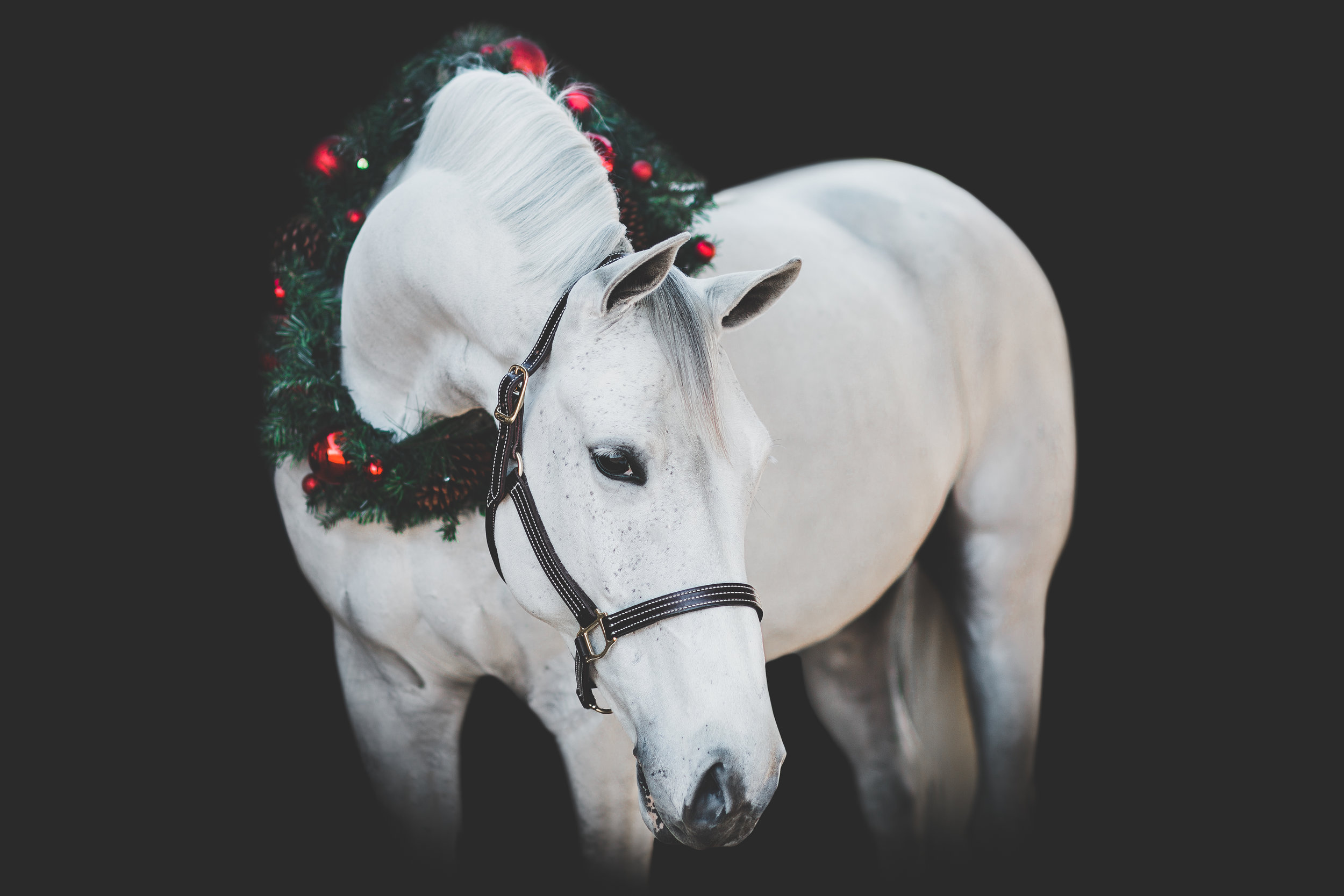 My Favorite Christmas Black Backgrounds From 2017 Sara Shier Photography