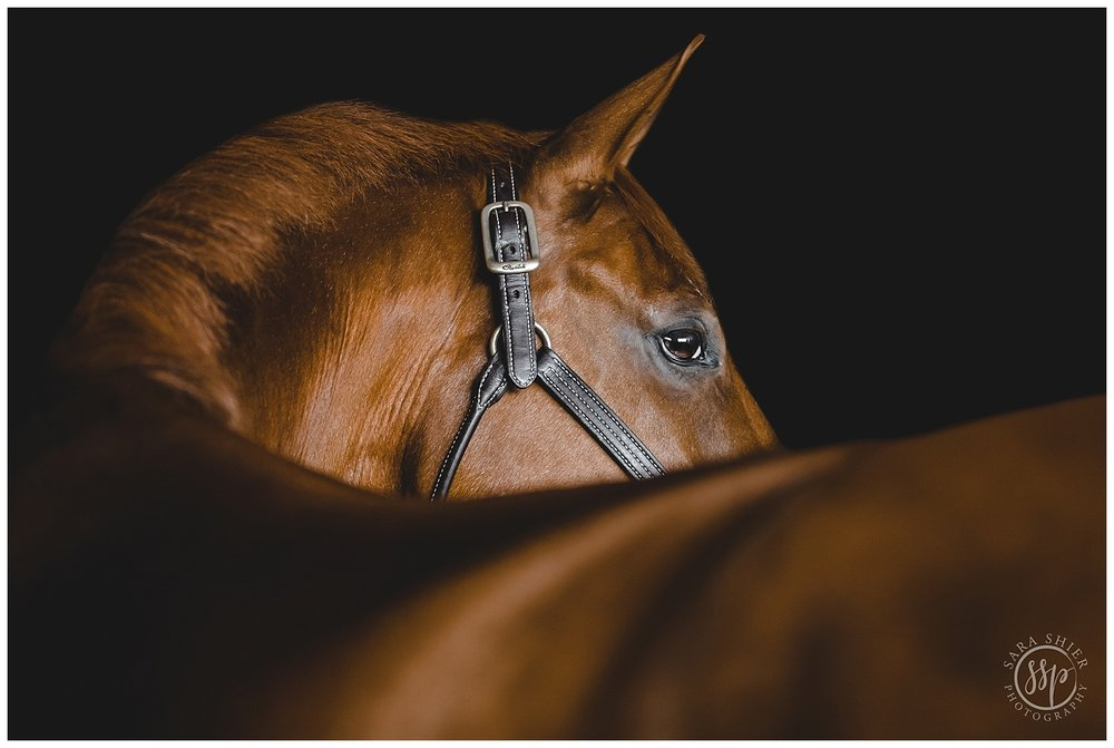 Black Background Horse Rider Equine Photographer Southern California Sara Shier Photography SoCal Equestrian Cowgirl 2018-10-09_0001.jpg