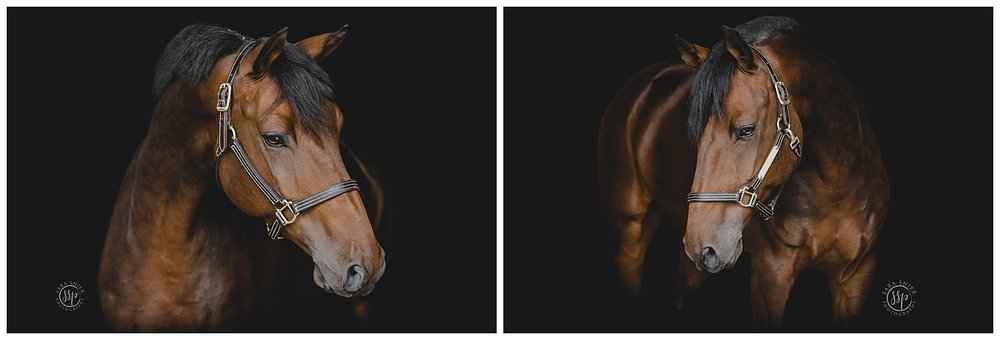 Black Background Horse Rider Equine Photographer Southern California Sara Shier Photography SoCal Equestrian Cowgirl 2018-10-09_0010.jpg