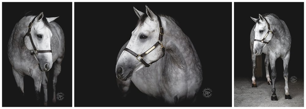 Black Background Horse Rider Equine Photographer Southern California Sara Shier Photography SoCal Equestrian Cowgirl 2018-10-09_0012.jpg