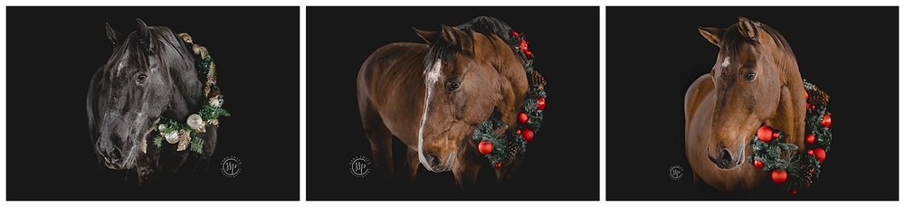 Black Background Horse Rider Equine Photographer Southern California Sara Shier Photography SoCal Equestrian Cowgirl_0162.jpg