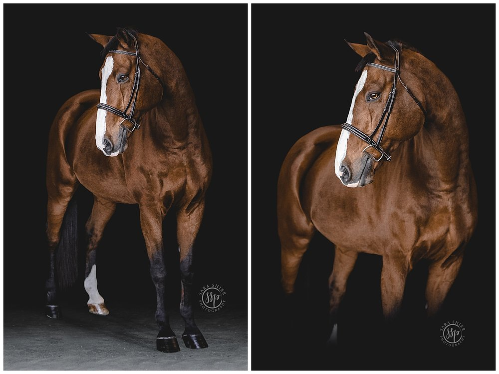 Black Background Horse Rider Equine Photographer Southern California Sara Shier Photography SoCal Equestrian Cowgirl_0213.jpg