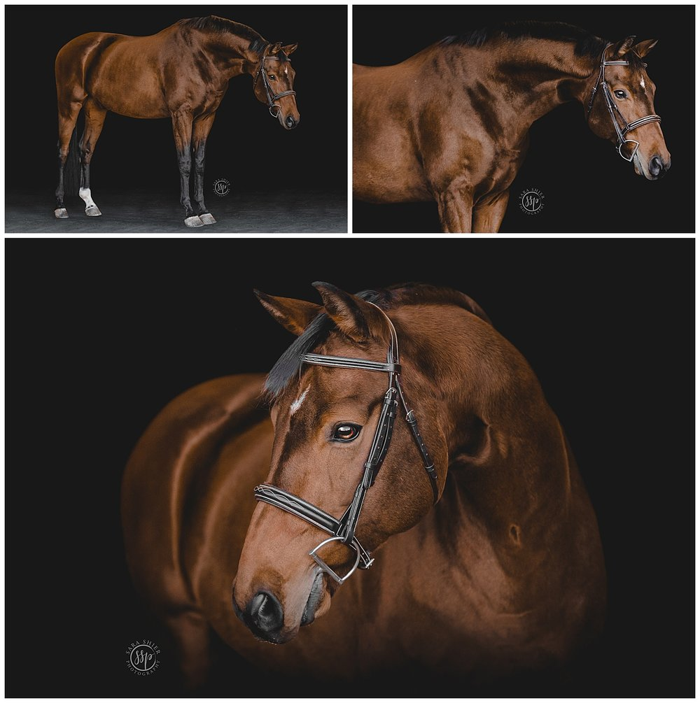 Black Background Horse Rider Equine Photographer Southern California Sara Shier Photography SoCal Equestrian Cowgirl_0212.jpg