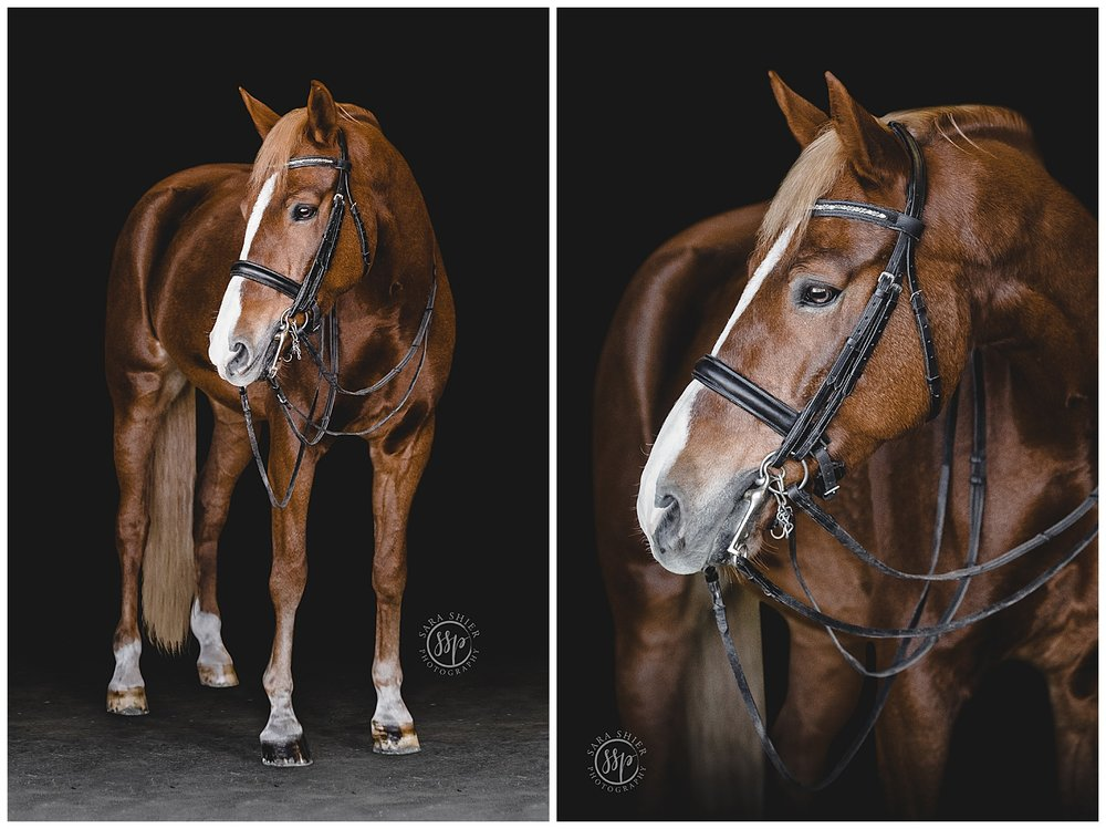 Black Background Horse Rider Equine Photographer Southern California Sara Shier Photography SoCal Equestrian Cowgirl_0215.jpg