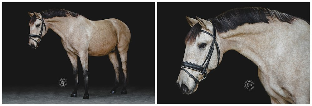 Black Background Horse Rider Equine Photographer Southern California Sara Shier Photography SoCal Equestrian Cowgirl_0217.jpg