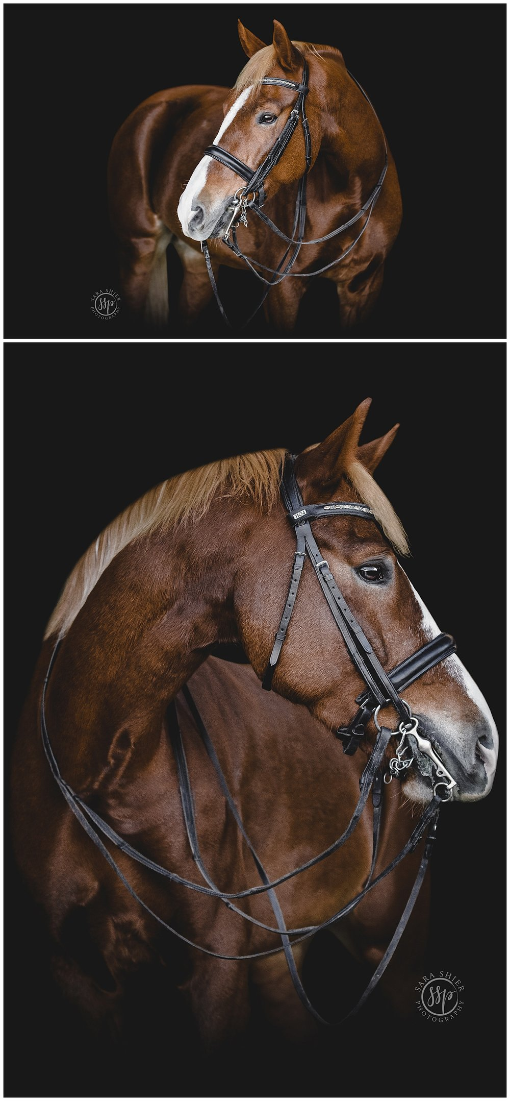 Black Background Horse Rider Equine Photographer Southern California Sara Shier Photography SoCal Equestrian Cowgirl_0216.jpg