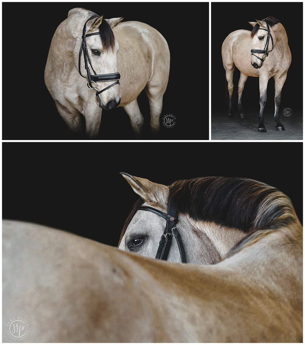 Black Background Horse Rider Equine Photographer Southern California Sara Shier Photography SoCal Equestrian Cowgirl_0218.jpg